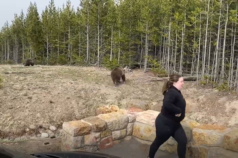 Yellowstone Grizzly Incident May 2021